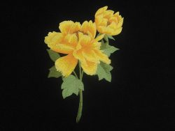 flower-motiv-sassy yellow on saffron