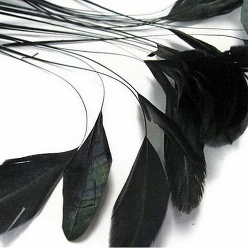blinkis-schwarz